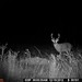Hanke's Hunts Kansas Game Camera Photo